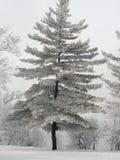 jedlinowy hoarfrost drzewo Zdjęcia Stock