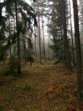 Jedlinowy i sosnowy las Zdjęcie Stock