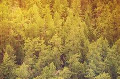 Jedlinowy lasowy widok od above Fotografia Stock