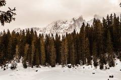 Jedlinowy lasu i góry krajobraz z śniegiem zdjęcie royalty free