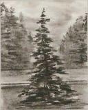 jedlinowy osamotniony drzewo Obraz Royalty Free