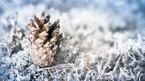 Jedlinowy rożek na lekkim tle w lesie Zdjęcia Stock