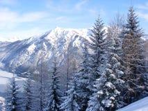 jedlinowych gór śnieżni drzewa Zdjęcia Royalty Free