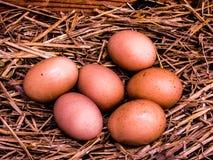 Jedna druga tuzin naprawdę świezi brown jajka w kurnym ` s gniazdują obraz royalty free