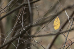 jednego liścia Zdjęcie Stock