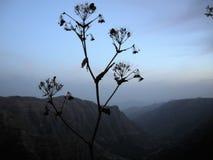Jednego wieczór w Etiopia Zdjęcie Stock