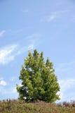 jedno drzewo obrazy stock