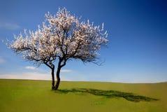 jedno drzewo Obrazy Royalty Free