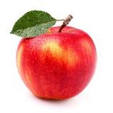 jedno jabłko Fotografia Stock
