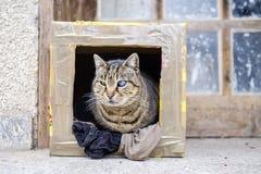 Jednooczny kot z wszechświatem w oku Zdjęcie Royalty Free