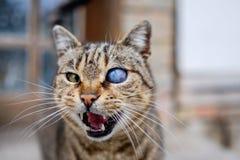 Jednooczny kot z wszechświatem w oku 4 Zdjęcia Royalty Free