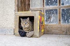 Jednooczny kot z wszechświatem w oku Obrazy Stock