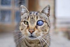 Jednooczny kot z wszechświatem w oku Obrazy Royalty Free