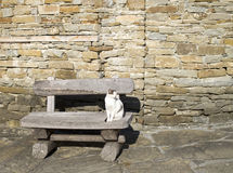 Jednooki aleja kot odpoczywa na ławce Zdjęcia Stock