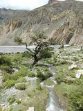 Jedyny samotny drzewo w ten miejscu pielęgnuje & x28; Mustang& x29; obrazy royalty free
