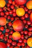Jedzenia lata owoc jagod Słodkich wiśni nektaryn Deseniowych Dojrzałych Organicznie morel Wibrujący kolory na zmroku - błękitny t Fotografia Stock