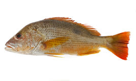 jedzenia ryb Zdjęcia Royalty Free