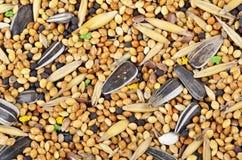 Jedzenie dla ptaków Jedzenie dla papug dla każdy dnia Zdjęcia Stock