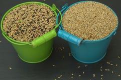 Jedzenie dla ptaków, nasieniodajna mikstura Obrazy Royalty Free