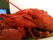 Jedzenie gotowany nowotwór Skorupiak jest jaskrawym czerwienią Zdjęcie Royalty Free
