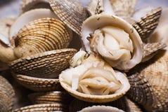 jedzenie morza Obrazy Stock
