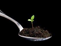 jedzenie organicznie Zdjęcia Stock