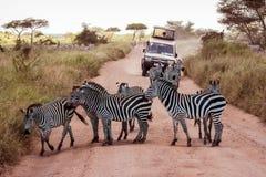 Jeep circondata dalle zebre sul safari Immagini Stock Libere da Diritti