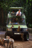 Jeep safari in Manyara Lake 1. The monkeys climb on a jeep in which tourists are. Humans and monkeys watch each other Royalty Free Stock Photo