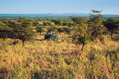 Jeep with tourists on safari in Serengeti Stock Photos