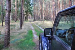 Jeep Wrangler in a pine forest Royalty Free Stock Image