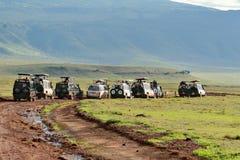Jeeps mit Touristen scharten sich nahe wilden Löwen der Gruppe. Lizenzfreie Stockbilder