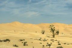 Jeeps traditional Safari Dune Bashing tourists Oman Ubar Desert Rub al Khali 7 stock photo