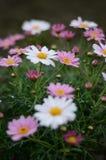 Jefe de flores coloridas imagen de archivo libre de regalías