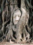 Jefe de la estatua Buda en la raíz del árbol Fotos de archivo libres de regalías