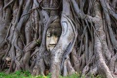 Jefe de la estatua de Buda en la raíz del árbol del bodhi en Wat Mahathat en Ayutthaya Tailandia foto de archivo