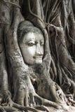 Jefe de la imagen en el árbol, Ayutthaya, Tailandia de Buda LA UNESCO fotos de archivo libres de regalías