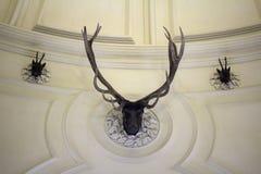 Jefe de la pared de los ciervos imagen de archivo libre de regalías