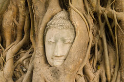 Jefe de la piedra arenisca Buda en las raíces del árbol imagen de archivo