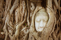 Jefe de la piedra arenisca Buddha Foto de archivo