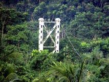Jefe de las demostraciones de un puente en el bosque verde foto de archivo libre de regalías