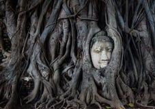 Jefe de una estatua de Buda en un baniano Fotografía de archivo