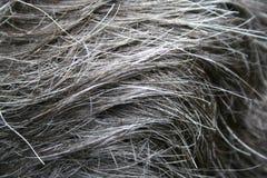 Jefe del pelo Imagen de archivo libre de regalías