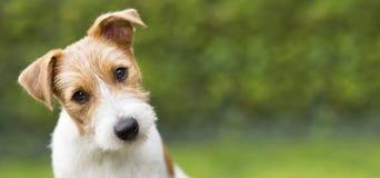 Jefe divertido de un perro casero lindo feliz del perrito - idea de la bandera del web foto de archivo libre de regalías
