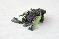 Jefe grande del bróculi de brote púrpura con las hojas Imágenes de archivo libres de regalías