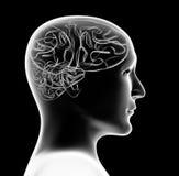Jefe transparente 3d de la persona y del cerebro ilustración del vector