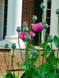 Jefferson's Monticello obrazy stock