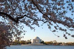 Jefferson-Denkmal gestaltet durch Kirschblüten stockfotografie