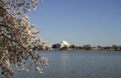 Jefferson-Denkmal- und Kirschblüten stockfotos