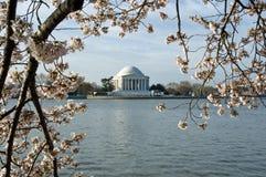 Jefferson in der Blüte Lizenzfreies Stockbild