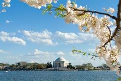 Jefferson-Erinnerungskirschblüten-Gezeiten- Bassin USA Stockfoto